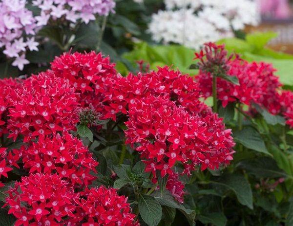 las-mejores-flores-para-cultivar-en-maceta-a-pleno-sol-01