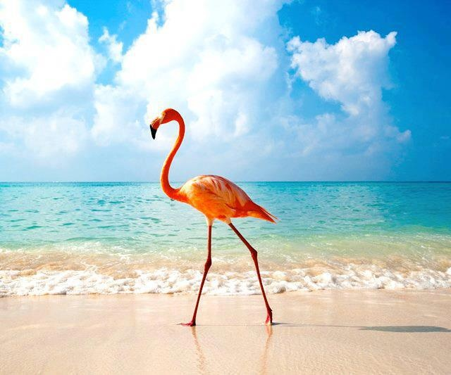 Flamingo Bahamas We Dnt Jus Fly Here Live Pinterest Birds And Animals
