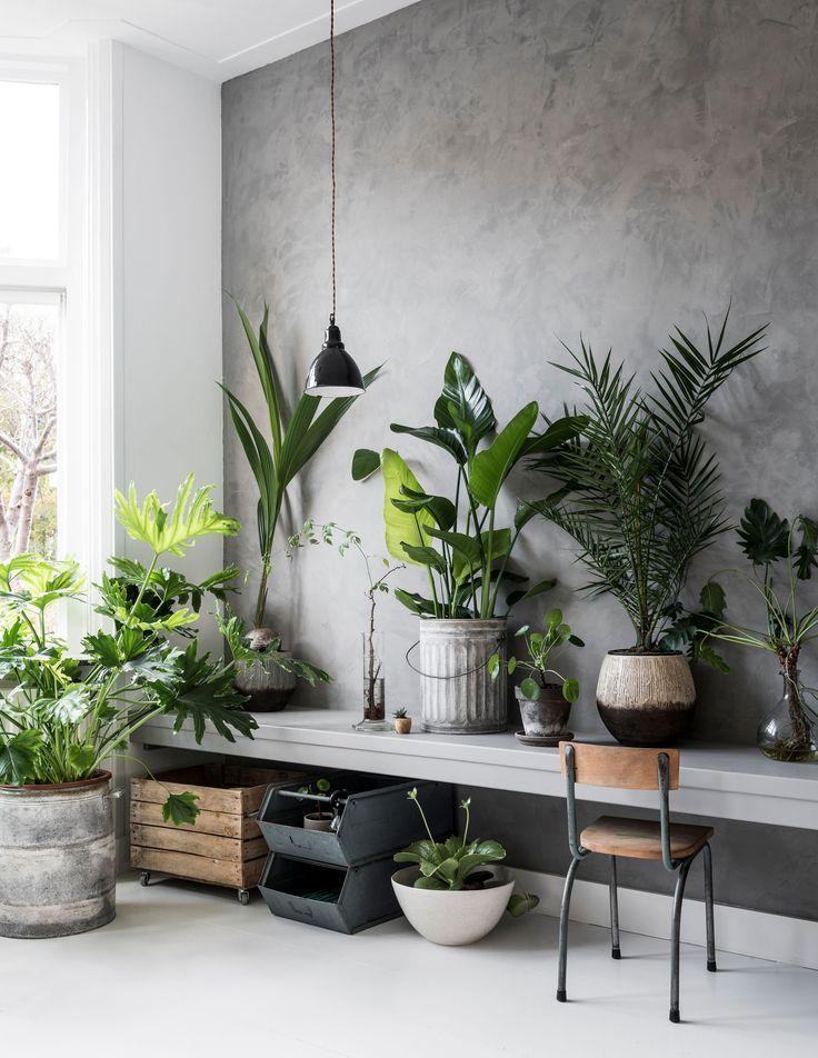 A Diy Wall Shelf Next To The Sofa With Images Botanical