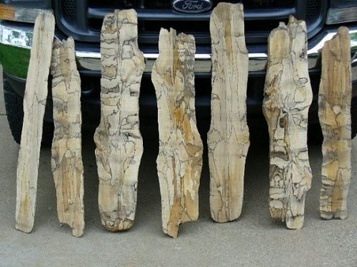 Best images about bomen met slaap spalted wood on