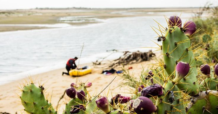 Prickly pear and not-so-prickly packraft | Even though not all my packrafting dreams in Portugal came true I still managed to 'paddle' and sail the estuary of the Rio Formosa on the Atlantic Ocean cost . | #portugal #algarve #thisispackrafting #packraftingportugal #rioformoso #travel #travelling #packrafting