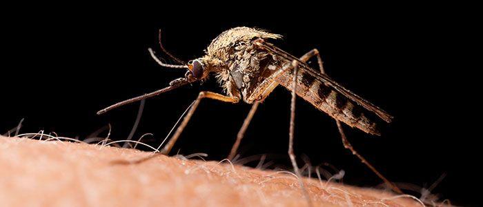 Zika-viruset, som spres av mygg og som har forårsaket en epidemi i Sør-Amerika, kan være knyttet til et utslipp av genmodifisert mygg. Viruset er nå bekreftet i 21 land, og reisende har tatt med se...