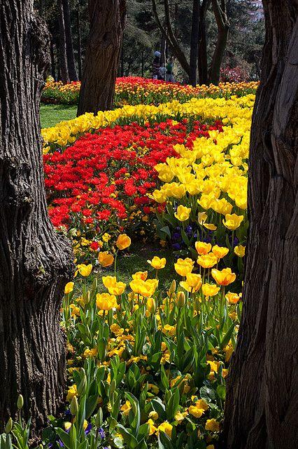 River of tulip, Istanbul, Turkey