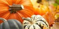 When to Plant Pumpkins Seeds | eHow.com