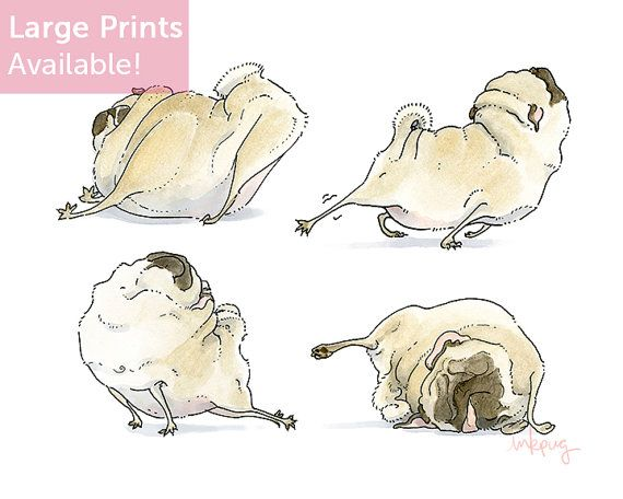 Four Pug Poses - 8x10 Pug Art Print - Good Morning Stretches, Pug Yoga, Sleeping Pugs Print from an Ink and Watercolor Pug Drawing by Inkpug