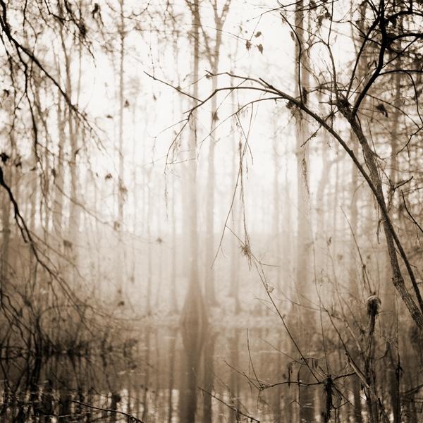 David Halliday - Abstract Nature, Louisiana
