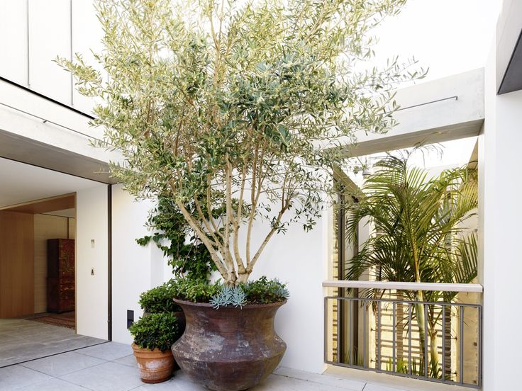 Tobias Partners - Deepwater House Rooftop Courtyard