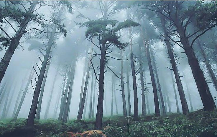 "Polubienia: 758, komentarze: 7 – @divine_forest na Instagramie: ""presents __________________________ @gracebaltazar_ __________________________ Thank you for…"""