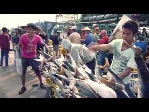 Banyak Ikan Tongkol & Cumi di Muara Angke