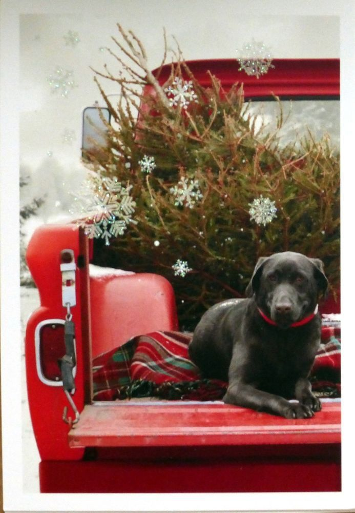 10 BLACK LABRADOR RETRIEVER LAB dog in red pickup truck Christmas Cards Hallmark