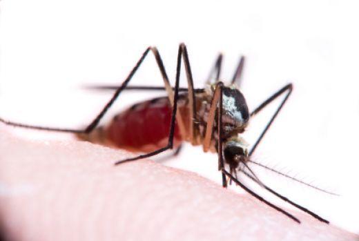 Mosquito Bites - Treatment & Prevention Tips