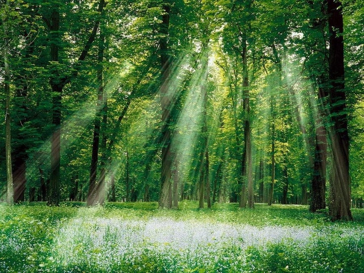 Magic Forests, Sun Ray, Amazing Pictures, Trav'Lin Lights, Forests Wallpapers, Magicalforest, Amazing Nature, Fairies Tales, Nature Scene
