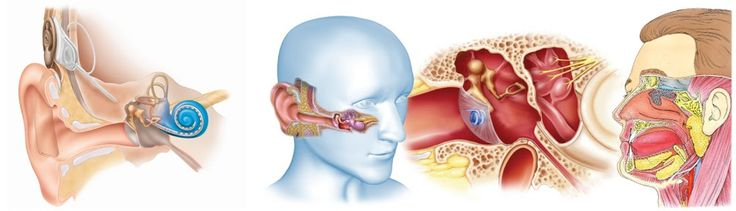 Otorhinolaryngology (Otolaryngology) is the area of medicine that deals with disorders and conditions of the ear, nose, and throat (ENT) region, and related areas of the head and neck. Doctors who specialize in this area are called otorhinolaryngologists, otolaryngologists, ENT doctors, ENT surgeons, or head and neck surgeons.