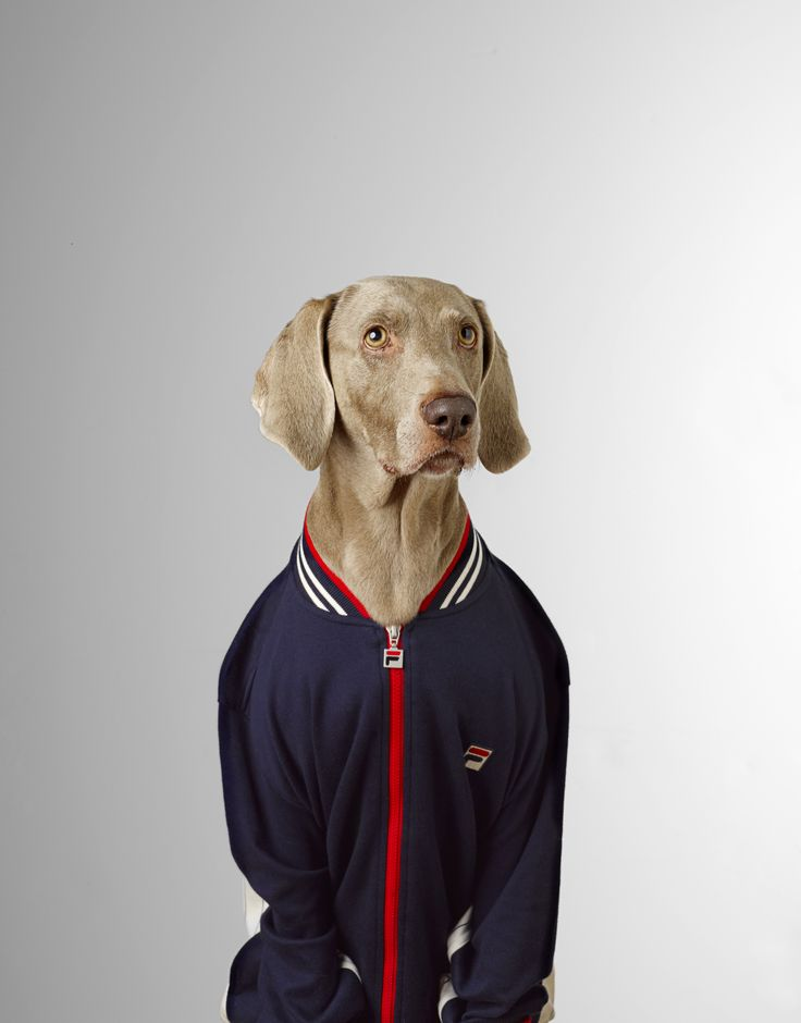 #danmatthews #photography #stilllife #advertising #portraiture #dog #fhm #studio #cooldude #nicejacket #downwiththekids #cute