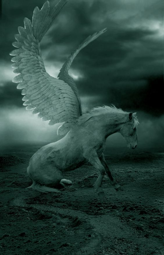Pegasus energy is inspiration, knowing boundaries instinctively, strength and humility. Quick and agile. He is a protector of sacred places.The horse of the Muse. He is of service to poets...he calls us to create in music, writing, poetry, in art..he inspires us to share our expression of beauty...Pegasus has a Warrior Spirit.