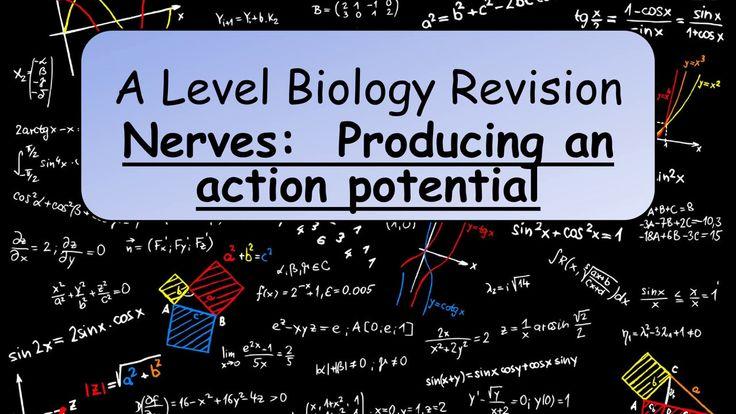As level biology coursework ideas   Science fair essay format     As level biology coursework ideas