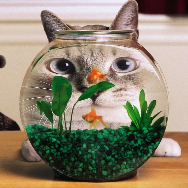 ✭ So this is what it might be like living in a fish bowl. Does it make me look fat?: