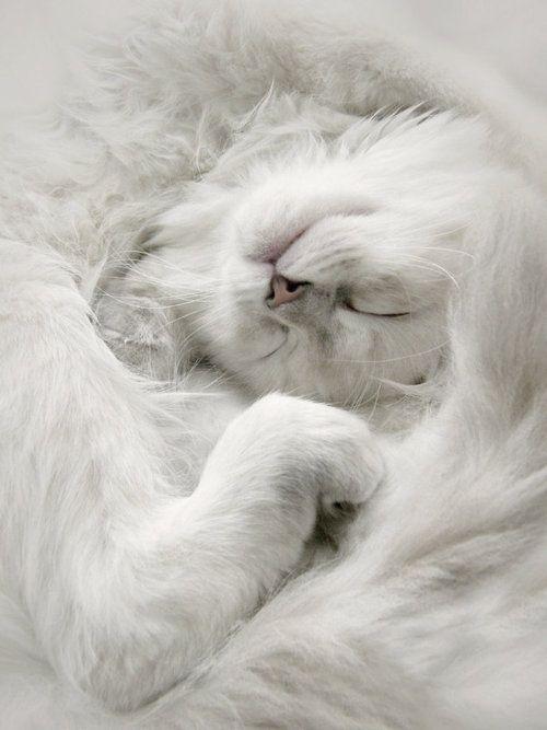 blanc   white   bianco   白   belyj   gwyn   color   texture   form    cat