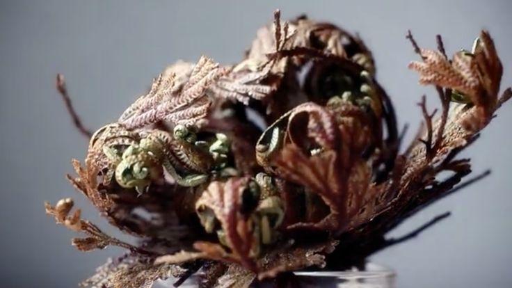 Rosas de Jericó, las aves fénix del mundo vegetal
