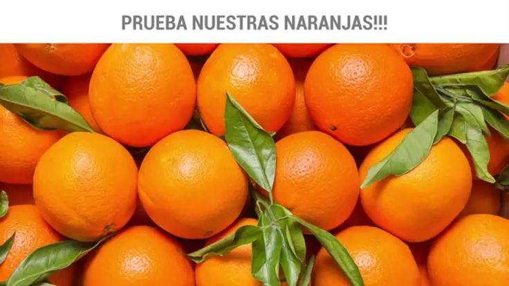 En Naranjas LaSafor ofrecemos la máxima calidad en cada uno de nuestros productos, al comprar naranjas online en www.naranjaslasafor.com, en 24-48 horas podrás disfrutar de naranjas de Valencia recién recolectadas, con todo su aroma, sabor y con hojas para comprobar su frescura.  Prueba nuestras naranjas a domicilio a través de nuestra web: https://naranjaslasafor.com/