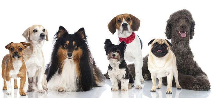 2016 Recipient: Therapeutic Dog Services Inc   www.tdsinc.com.au #quisk #design #adelaide #southaustralia #bigpicture #giveback #tdsinc