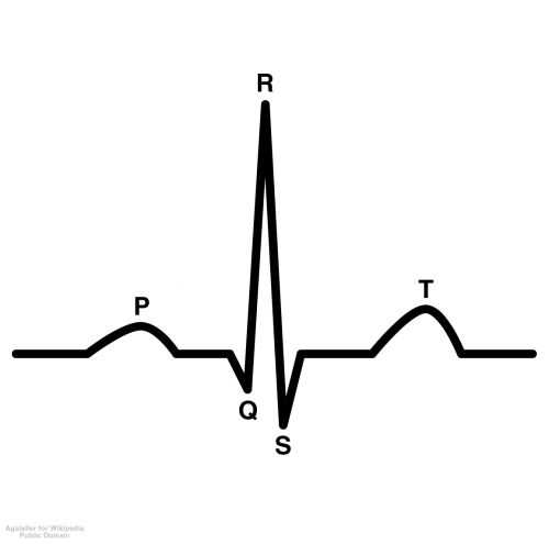 Interpreting an ECG The ECG (electrocardiogram) is divided into three main sections: the P  wave, the QRS complex, and the T wave.  During the phase known as the P  wave, the atria contract.  The QRS complex is the ventricular  contraction, and the T wave is what is known as ventricular  re-polarization—essentially the ventricles preparing for the next  contraction.