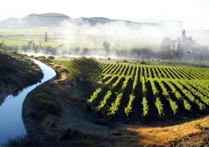 Weltevrede – Jonker Family Wine Estate, Robertson Wine Route