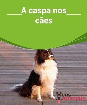 Caspa nos cães: as causas, o tratamentos e os cuidados A #caspa nos cães é formada por um conjunto de #células mortasque se desprendem da pele. É muito importante identificar a #causa para tratá-la corretamente. #Saúde