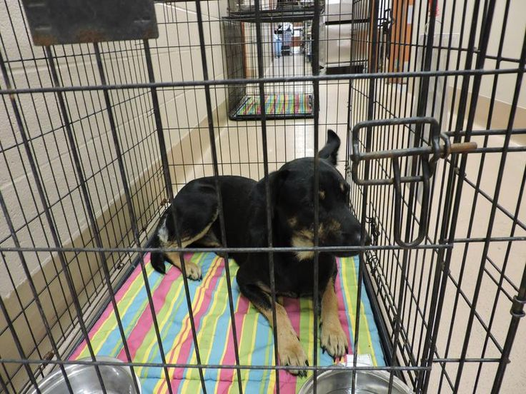 Collin County Animal Services Adoption Search Results