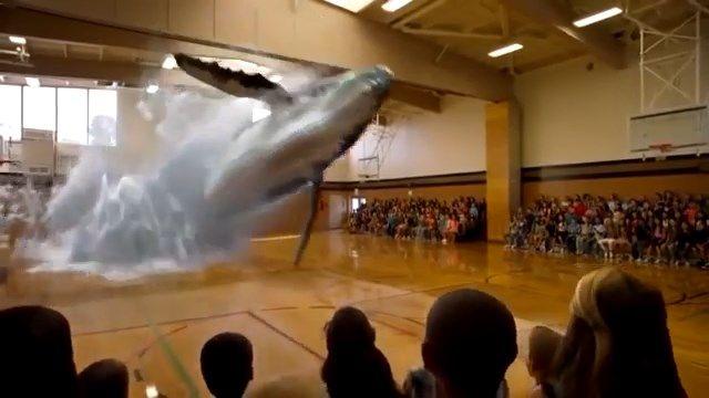 7D Hologram Technology Whale Fish Video - 7D Hologram Technology Show in Dubai