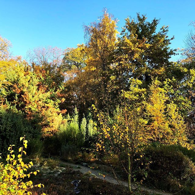 Herbst Im Botanischengarten In Munster Garten Pflanzen Gartentechnik Balkon Pflanzen Gartenliebe Gartengestaltung