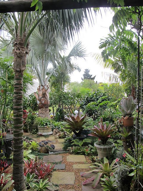 Garden Ideas Cape Town 72 best garden ~ south african images on pinterest | plants