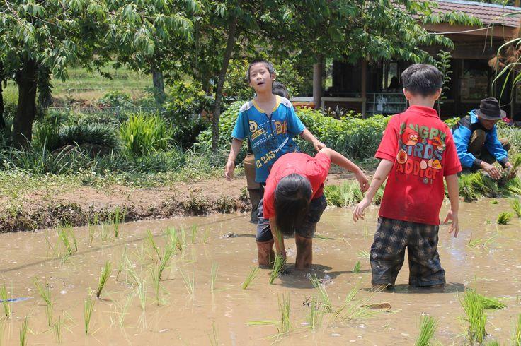 """Ayo kawan menanam padi.. Menanam padi disawah kita.. Ambil Cangkulmu... Ambil Cangkulmu... Kita bekerja tak jemu-jemu.. Cangkul-Cangkul-Cangkul yang dalam.. Ingin merasakan sensasi bercocok tanam seperti ini.. come & have fun together di Citra Alam Riverside... Find Out The Location on Google Maps with keyword """"Citra Alam Riverside"""""""