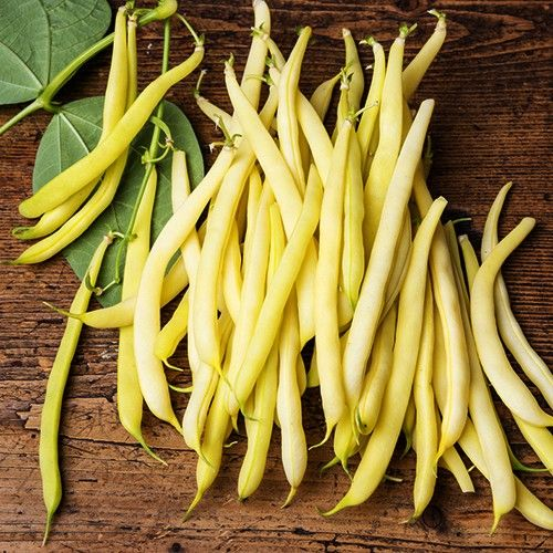 DWARF BEAN BUTTER CHEROKEE WAX :: 30 seeds via Green Seed Tasmania. Click on the image to see more!