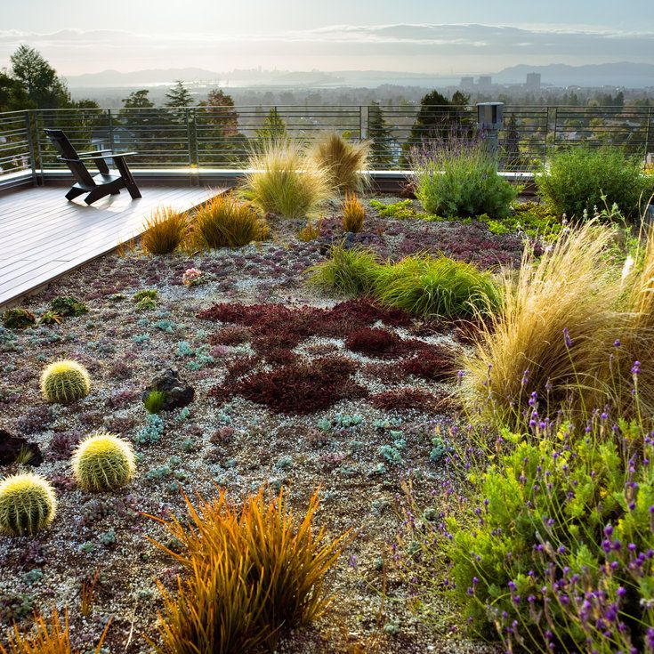 Look up for low-water plant inspiration - 12 Great Drought-Tolerant Plants - Sunset