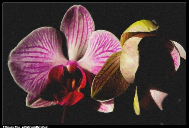 Orchid+flowers+-+photographic+processing+(340)