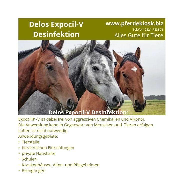 Idee Von Pferdekiosk Auf Gutes Und Tipps Zum Thema Gesunde Pferde