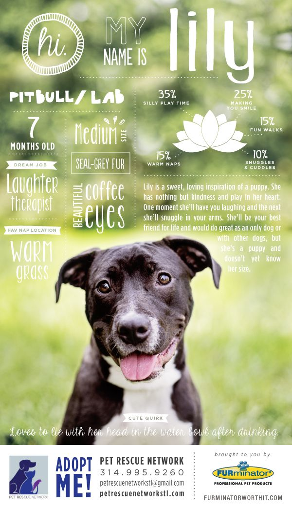 Hi. My name is Lily. I'm looking for my forever home. #pet #adoption #poster #dog #design #infographics