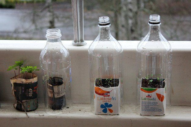 Plastic Bottle Greenhouse | DIY Seedling Greenhouses Ideas For Your Garden This Spring