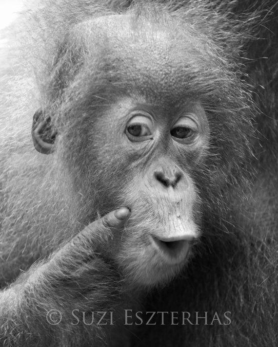 Dier kwekerij kunst grappige BABY orang-OETAN zwart & wit
