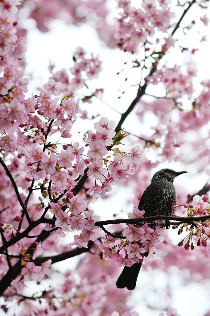 a bird in spring