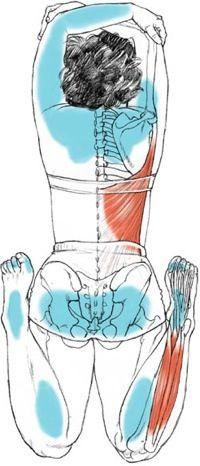 48 best alignmentkaminoff images on pinterest  yoga
