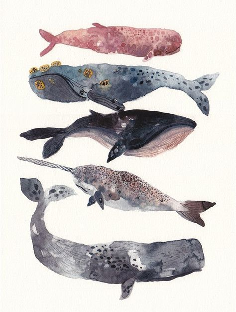 Whales: Watercolor, Sea Creatures, Whales Art, Art Prints, Whales Stacking, Law Schools, Water Colors, Michele Morin, Whales Prints