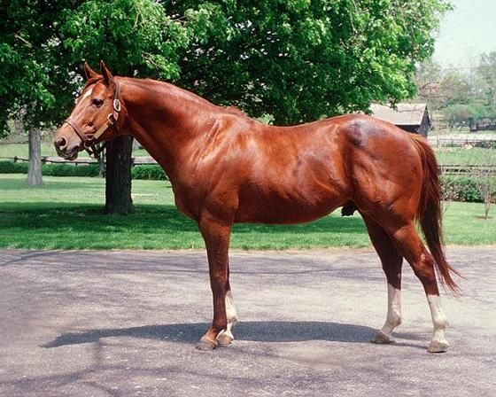 secretariat. triple crown winner 1973.