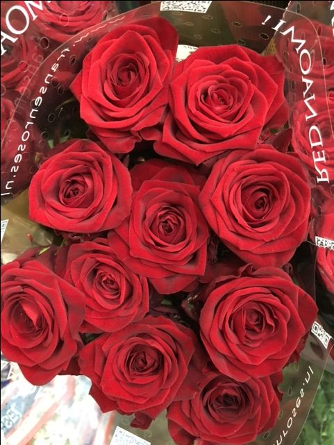 Rose 'Red Naomi'...Sold in bunches of 10 stems from the Flowermonger the wholesale floral home delivery service.