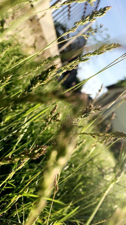 #Grass 2