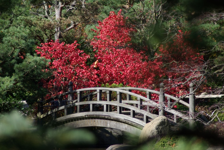 Anderson Japanese Gardens Rockford Il Things To Do