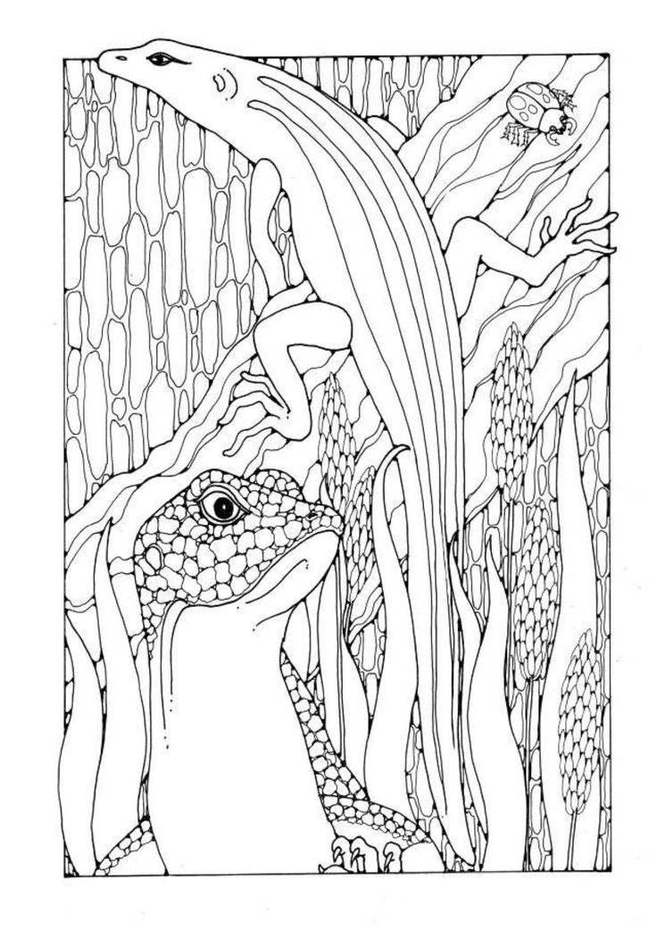 Lizards A Colouring Book Of Pictures And Patterns To Colour In Dandi