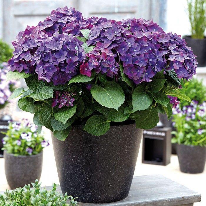 best 25+ gartenpflanzen kaufen ideas on pinterest - Gartenpflanzen