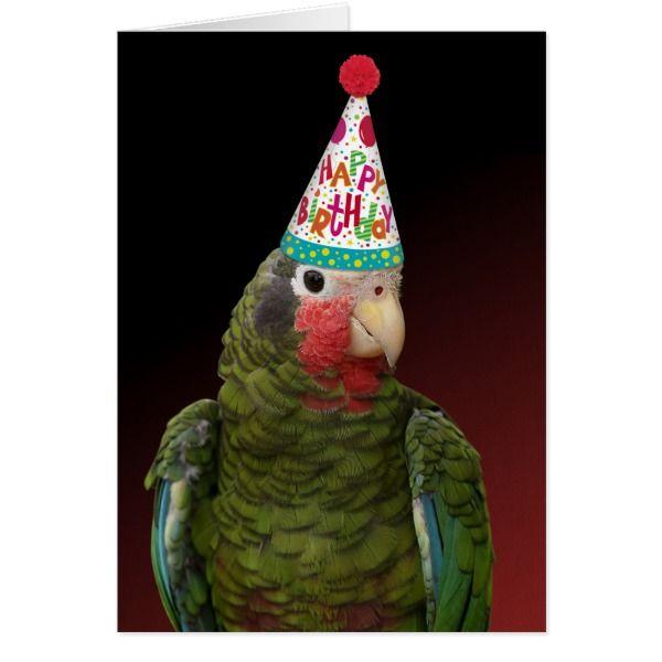 Colorful Amazon Parrot Birthday Card Zazzle Com Birthday Cards Happy Birthday Cards Parrot